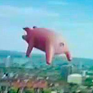 IOC pig