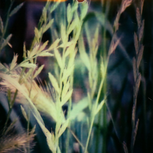 Spanishgrass Polaroid cover